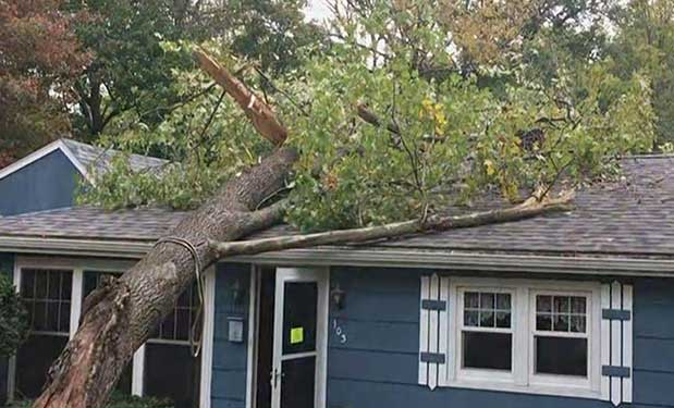 Tree Hits Roof